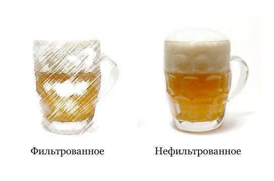 Чем отличается фильтрованное и нефильтрованное пиво