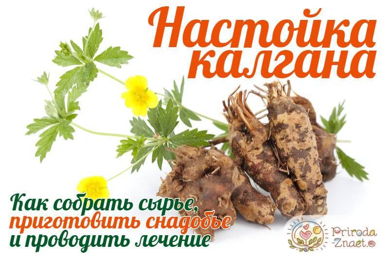 Калгановка – настойка на водке с корнем калгана + 9 рецептов