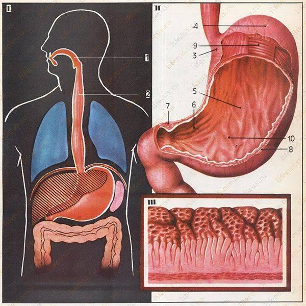 Что делать если болит желудок с похмелья?