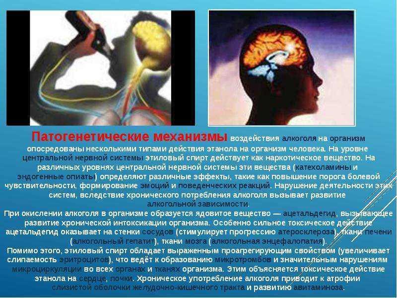 Эндогенный алкоголь в организме в норме определяется в количестве