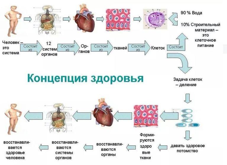 Восстановление печени после алкоголя - лекарственные препараты, бады и рецепты народной медицины