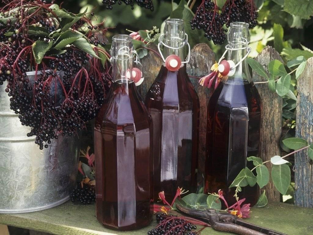 Лучшие рецепты приготовления ликера из черноплодной и красной рябины