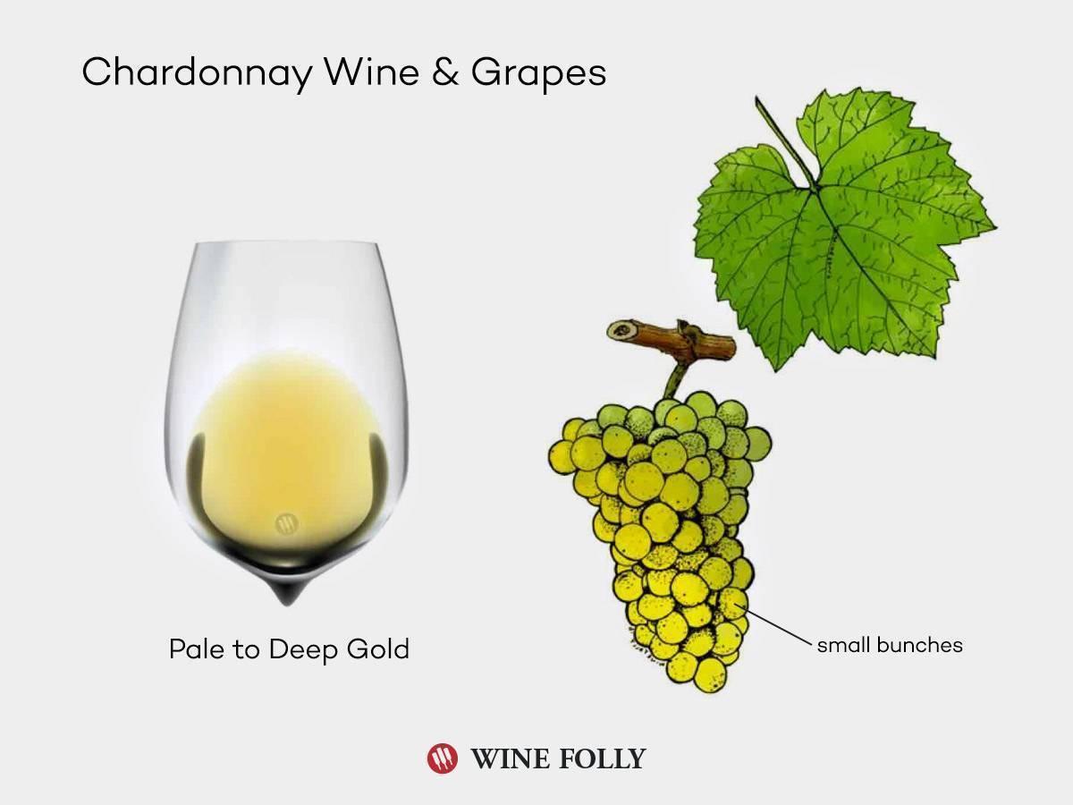 Шардоне вино: что это, где делают, лучшие производители
