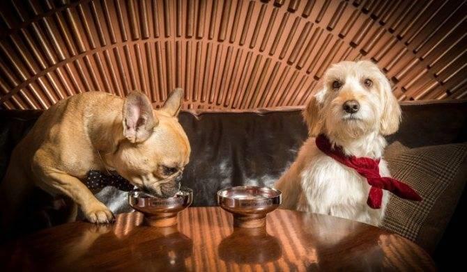 Рецепты приготовления коктейля Рыжая собака