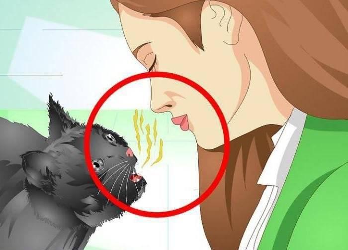 Как избавиться от неприятного запаха изо рта? причины возникновения, лечение и профилактика недуга