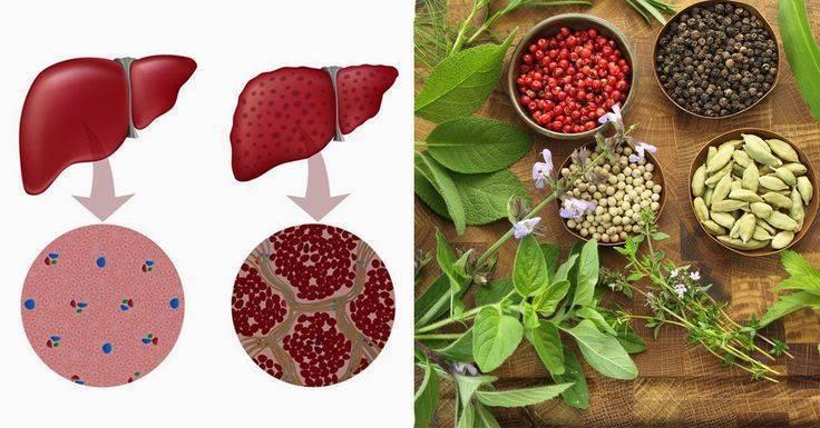 Как восстановить печень народными средствами: диета, травы и продукты для лечения и очищения организма
