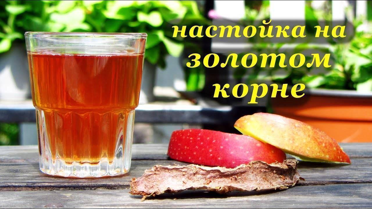 Как сделать настой из золотого корня. рецепт приготовления настойки золотого корня на водке (спирту, самогоне)