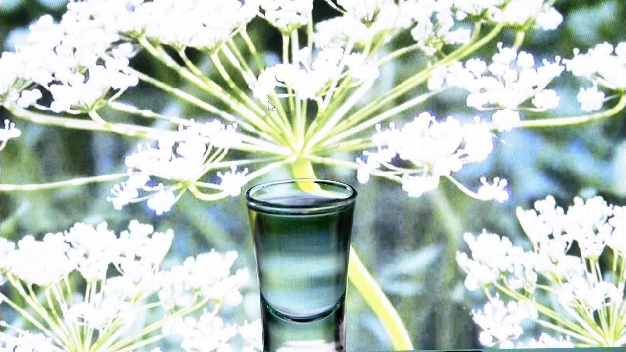 Лучшие рецепты анисовой водки в домашних условиях. как готовится анисовая настойка на самогоне?