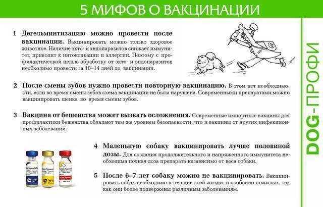 Прививка от столбняка и алкоголь: можно ли пить спиртное до и после вакцинации, возможные последствия
