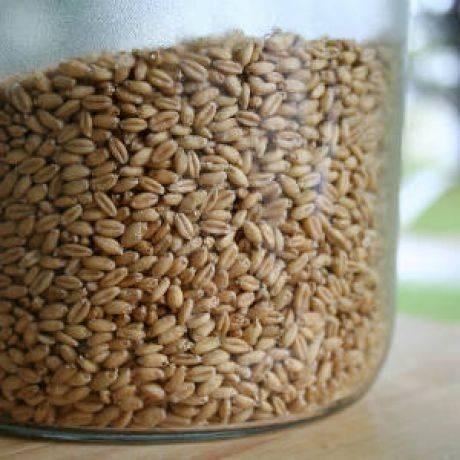Как вырастить пшеницу в домашних условиях: требования к участку и технология посева