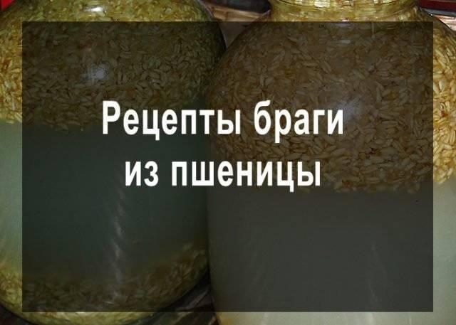 Как готовить брагу из пшеницы для самогона? правильные пропорции и простые рецепты постановки