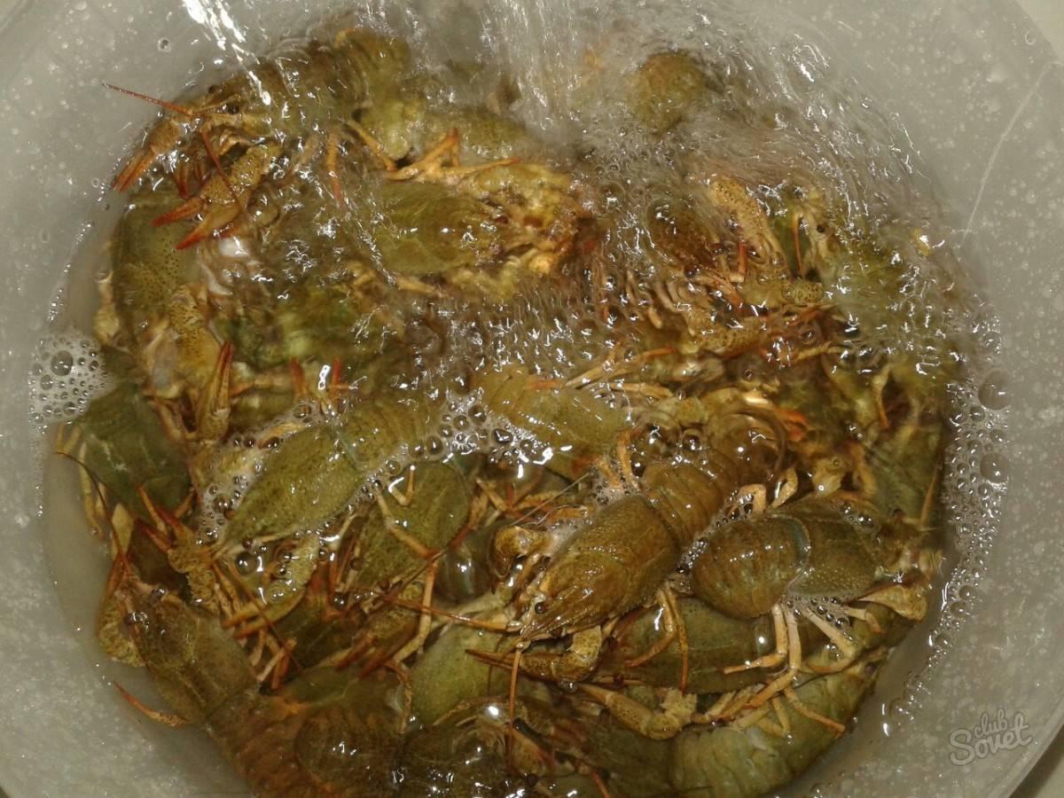 Варёные раки: как варить раков в домашних условиях, рецепты
