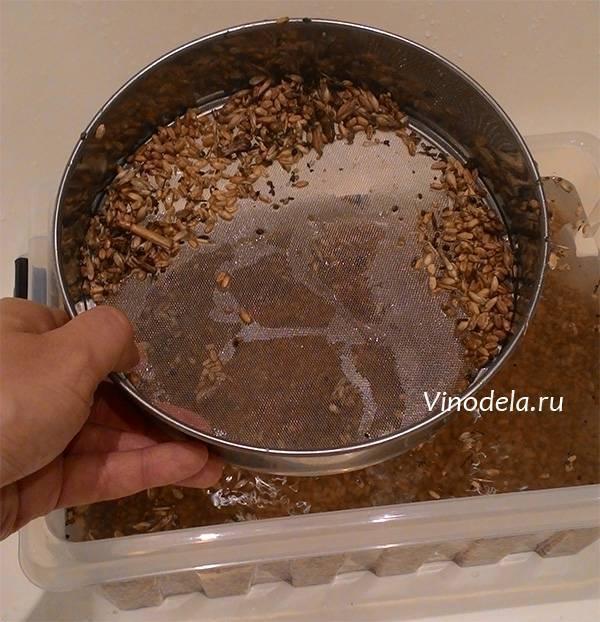 Самогон из пшеницы: проращивание зерна, приготовление браги, рецепты