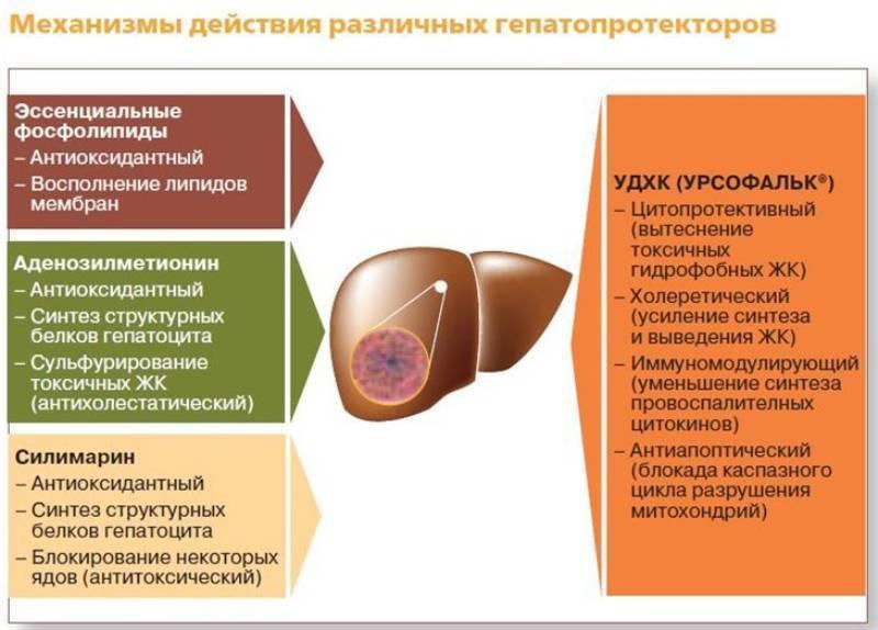 Лечение цирроза печени самые эффективные препараты