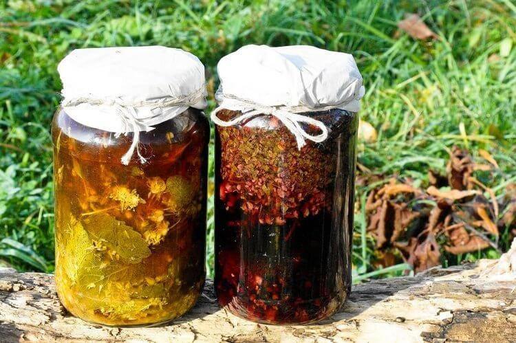 Корень калгана: описание, полезные свойства, применение и народные рецепты калгановки