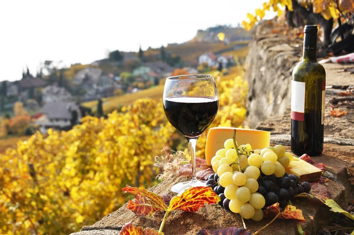 """Винные эксперты объяснили, почему праздник """"божоле нуво"""" — это лохотрон. особенности и правила употребления божоле — вина «младенческого» возраста"""