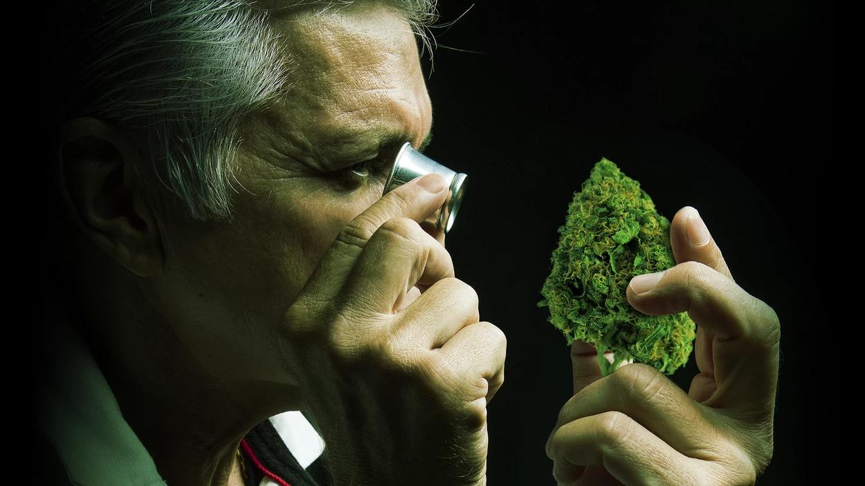 Последствия курения марихуаны: что происходит с организмом