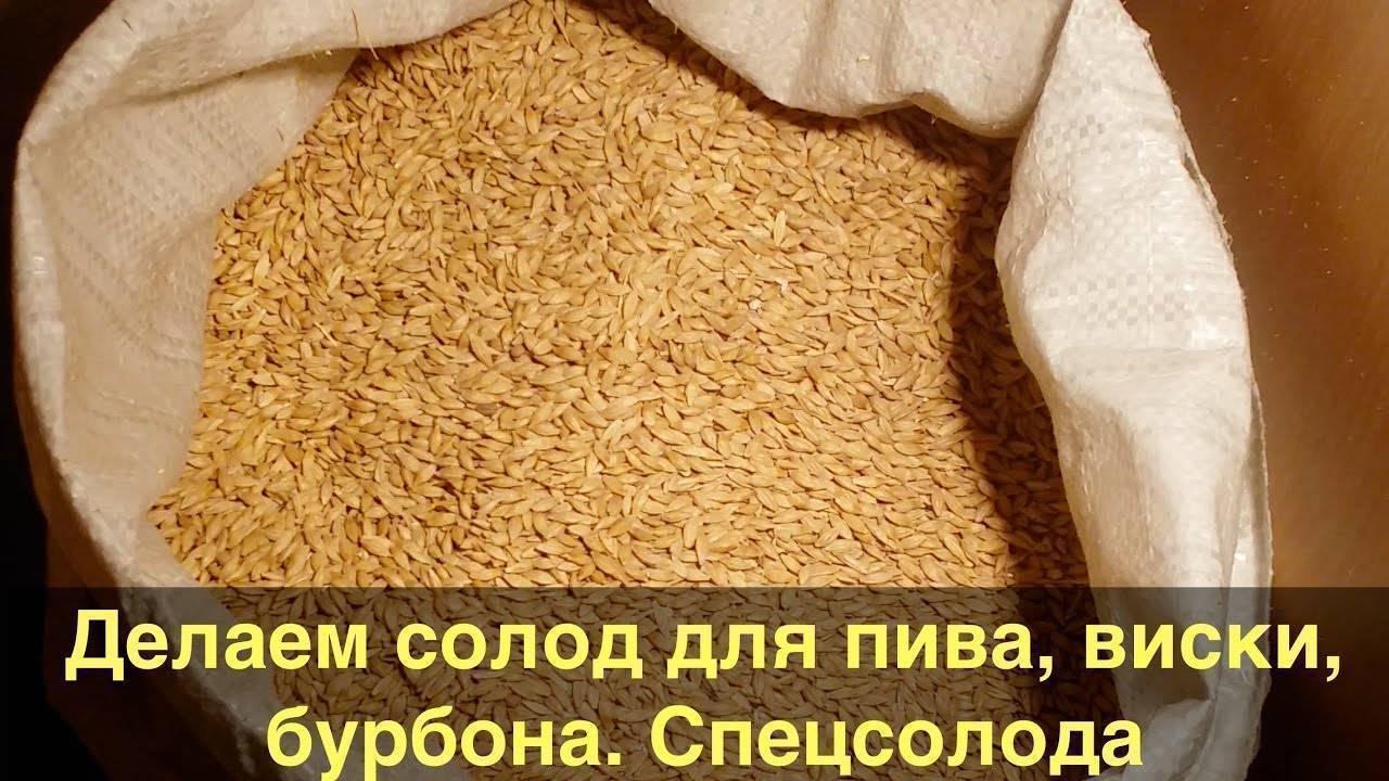 Как сделать пшеничный и ячменный солод в домашних условиях: приготовление своими руками