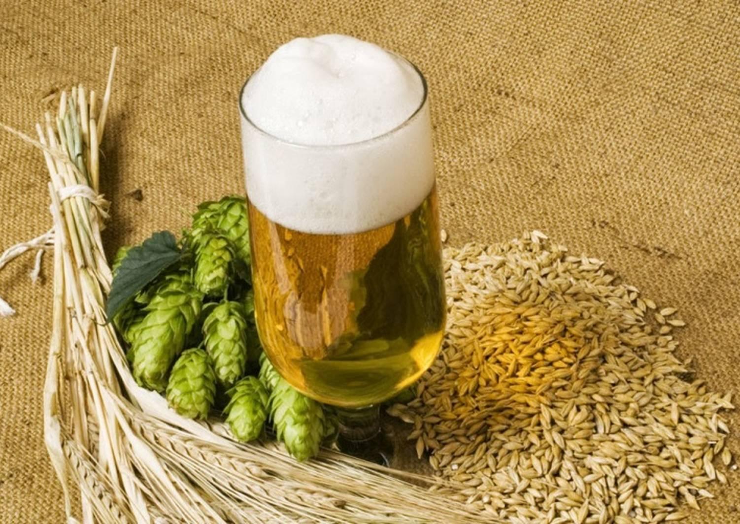 Пиво из хмеля в домашних условиях