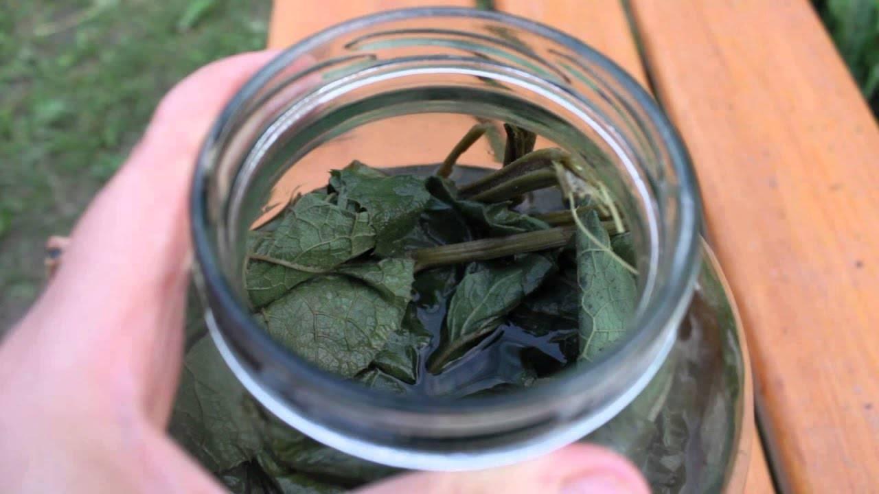Полезные свойства корня лопуха и противопоказания: настойка, экстракт, сок