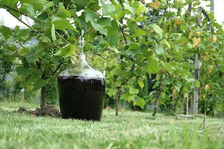 Почему вино не бродит: что делать и как его спасти