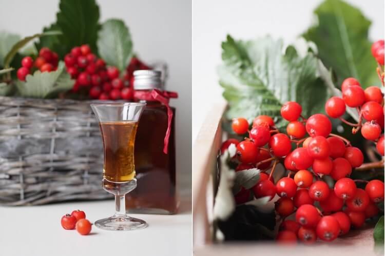 Настойка из красной рябины – чем полезна, как правильно готовить и принимать?