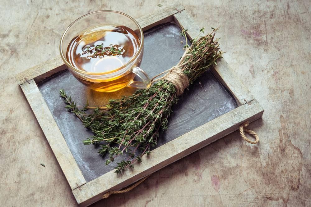 Чабрец от алкоголизма: лечение, противопоказания, отзывы