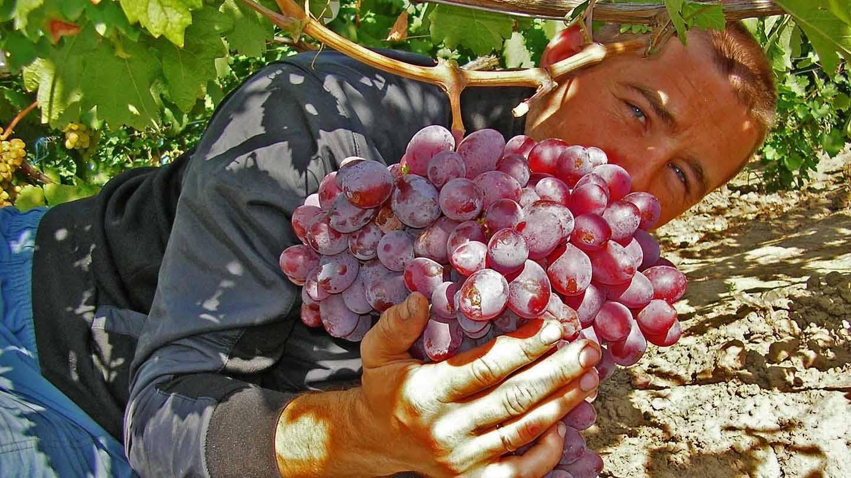 Словарь виноградаря: обрезка винограда.
