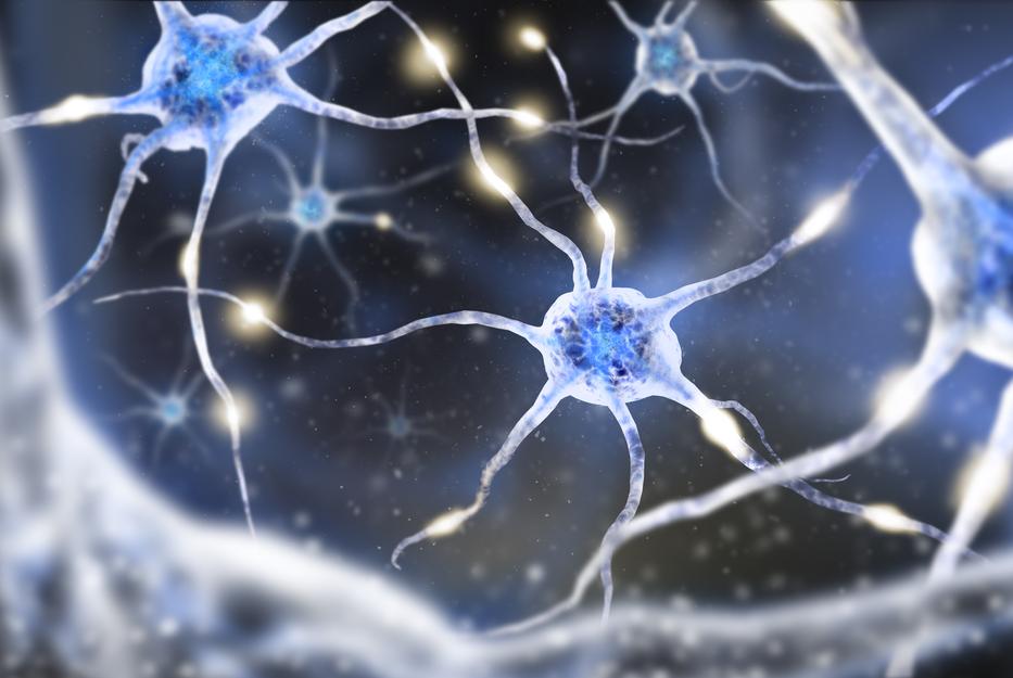 Восстанавливаются ли нервные клетки? что говорят ученые и как они объясняют этот процесс