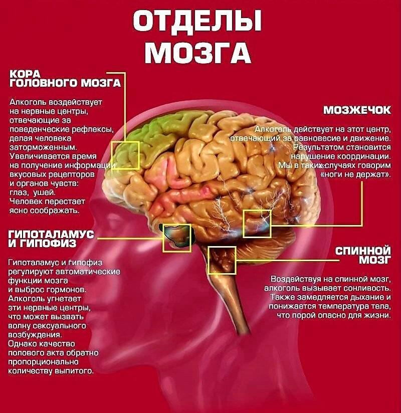 Алкоголь убивает клетки головного мозга - лечиммозг
