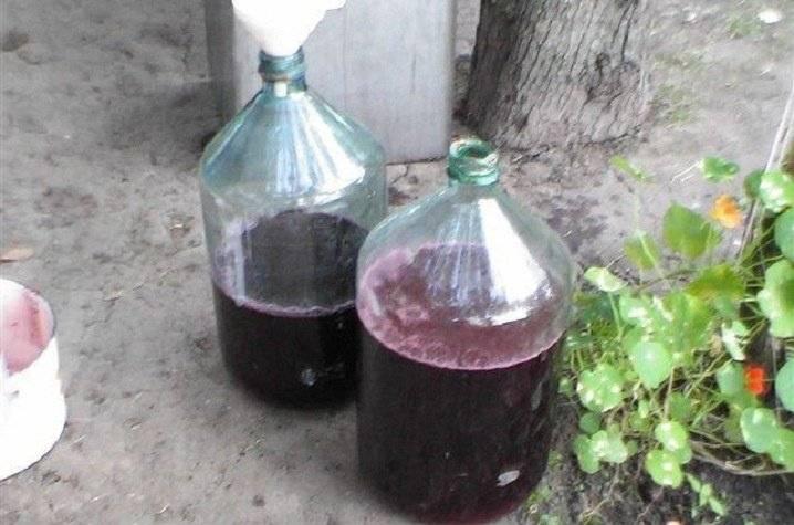 Заплесневело виноградное вино что делать