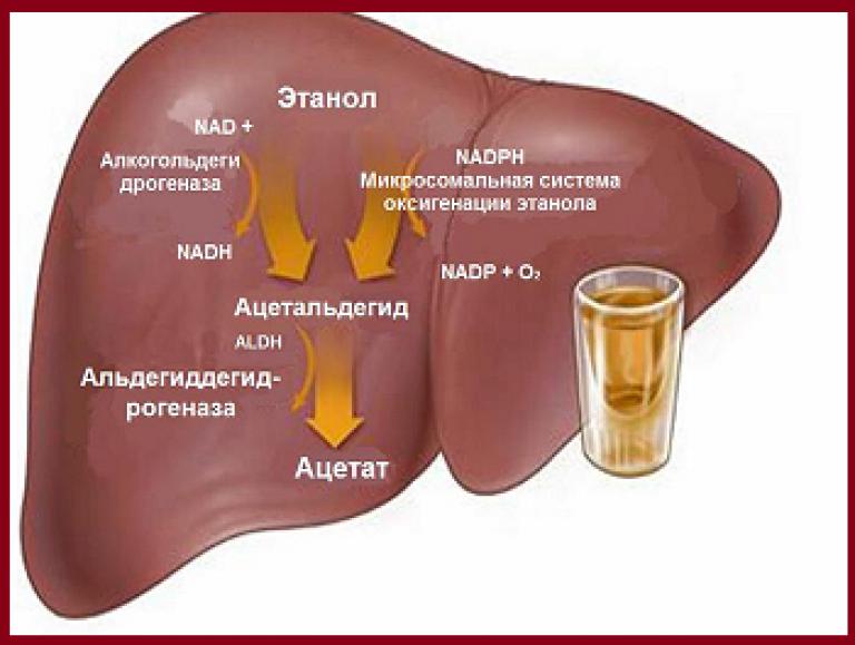 Температура после алкоголя с похмелья и причины ее изменения