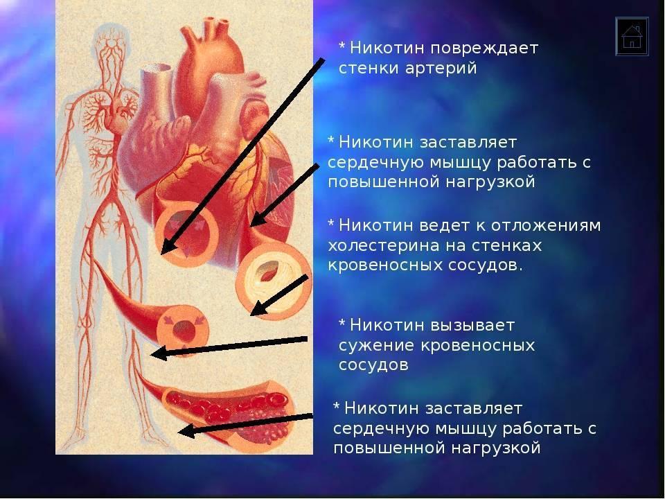 Как курение влияет на сосуды: расширяет или сужает, ухудшается ли их состояние и нормализуется ли оно после отказа от курения, фото сосудов курильщика