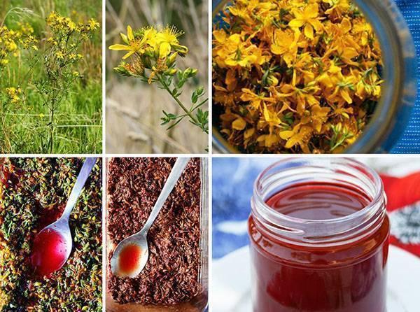 Настойка назверобое— польза ивред травы, рецепты приготовления вдомашних условиях наводке, спирту исамогоне