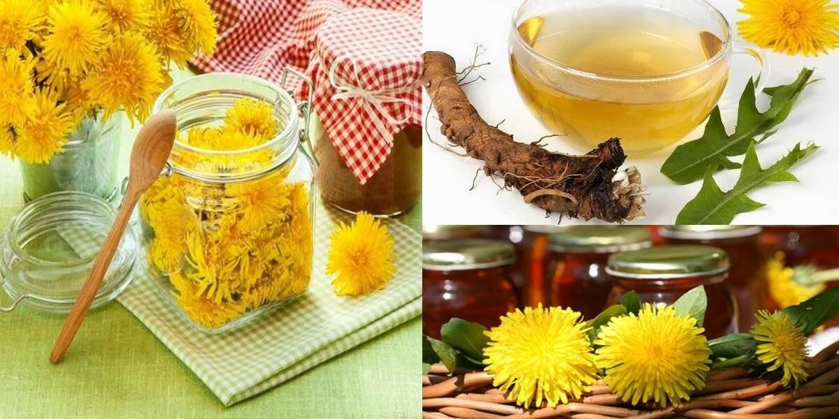 Одуванчик: лечебные свойства и применение – рецепты  пути к здоровью