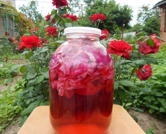 Самый лучший ликёр из лепестков чайной розы