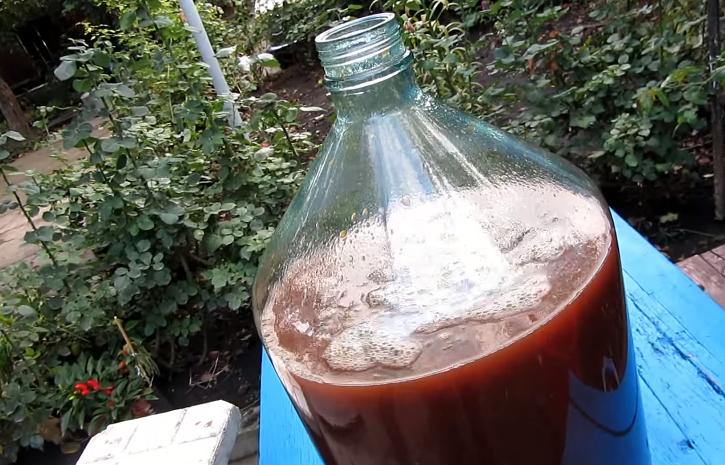 Брага из слив: как приготовить сливовую брагу в домашних условиях