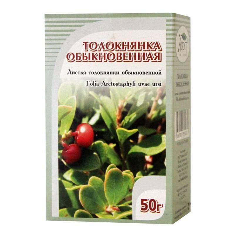 Растение толокнянка - лечебные свойства и применение в народной медицине