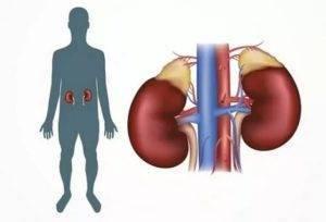 Глицерин вреден ли он для организма человека