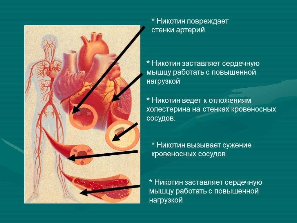 Может ли болеть сердце от курения как оно влияет на сосуды — заболевания сердца