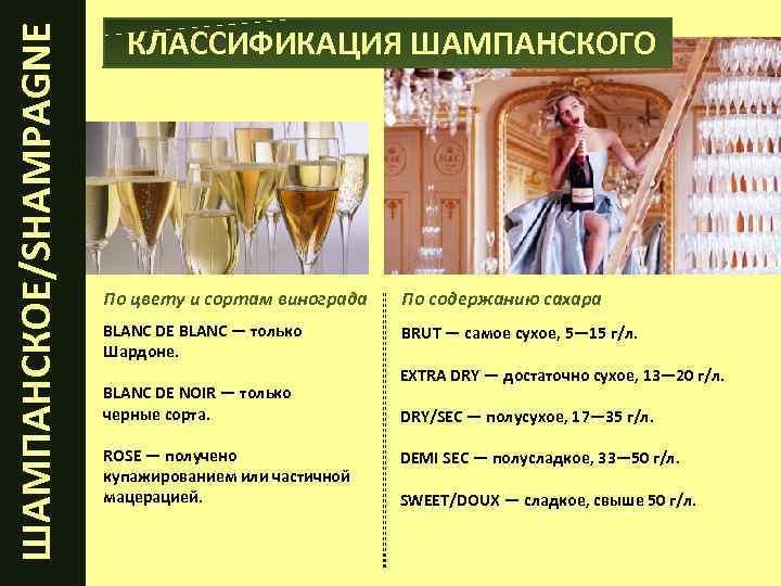 Подробный обзор игристых вин — популярные марки