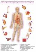 Чем восстановить печень: диета, народные средства, препаратыдиагностика и лечение печени и желчного пузыря