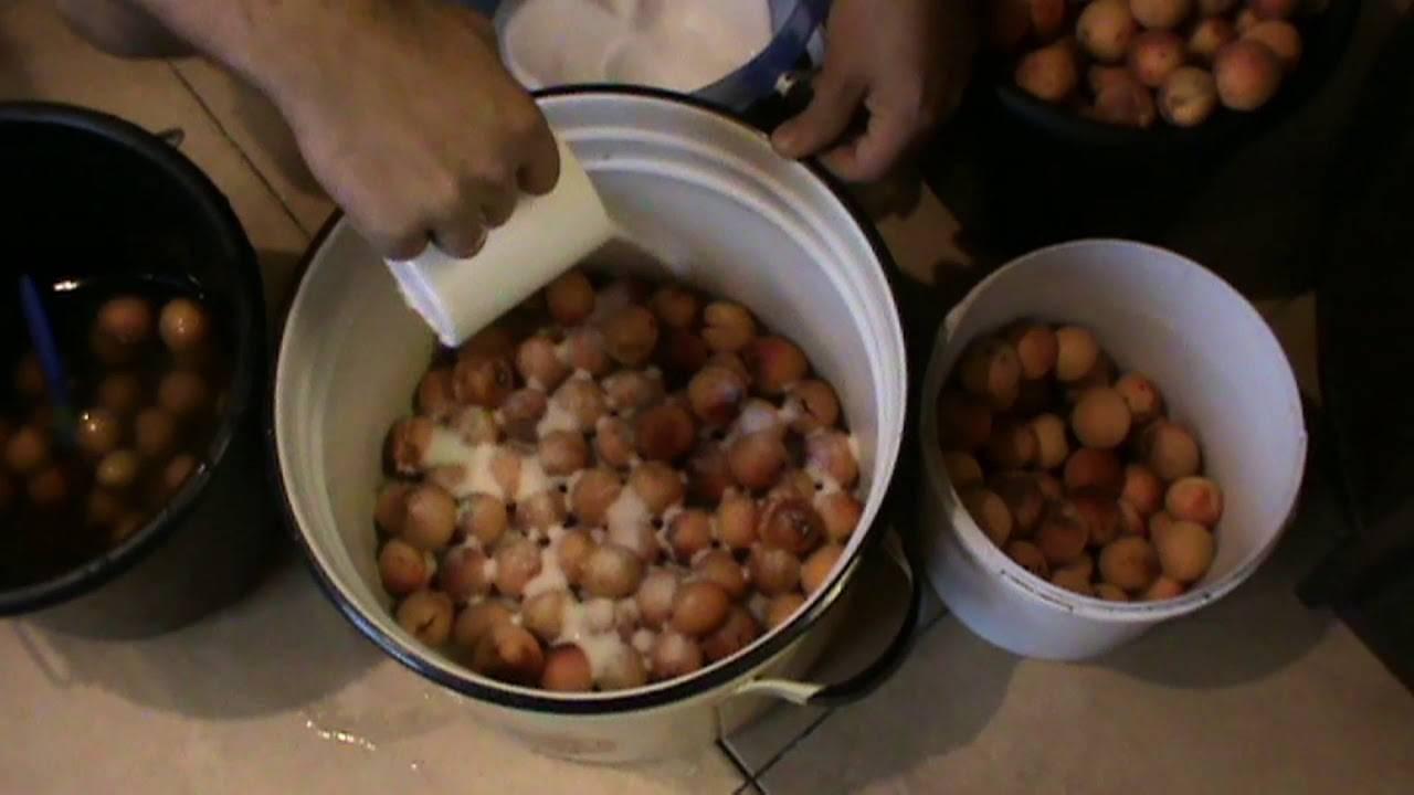 Рецепт приготовления самогона на абрикосах