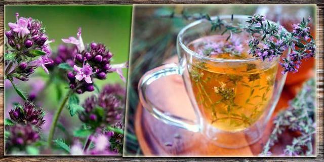 Рецепты из чабреца (тимьяна) от алкоголизма: полезные свойства и противопоказания
