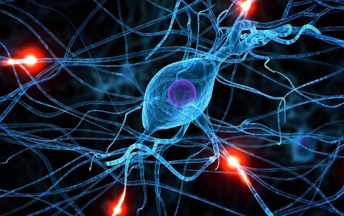 Нервные клетки не восстанавливаются! миф или правда?