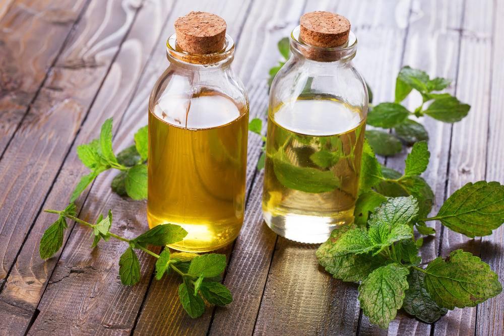 Зачто мылюбим чабрец:лечебные свойства травы, эффективные рецепты лечения ипротивопоказания для его использования