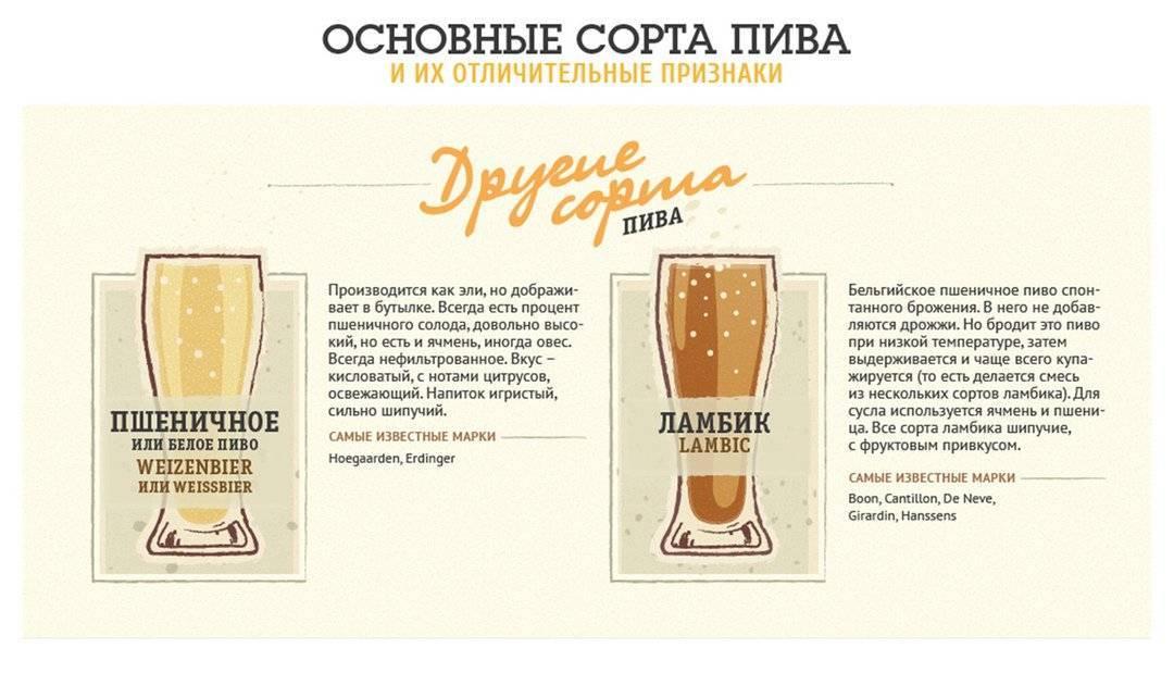 Основные сорта пива и их различия: гид, который расставит все на свои места