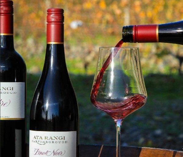 Сорт винограда пино нуар: описание сорта