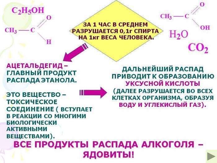 Таблица вывода алкоголя из организма - как рассчитать дозировку и время полного выветривания
