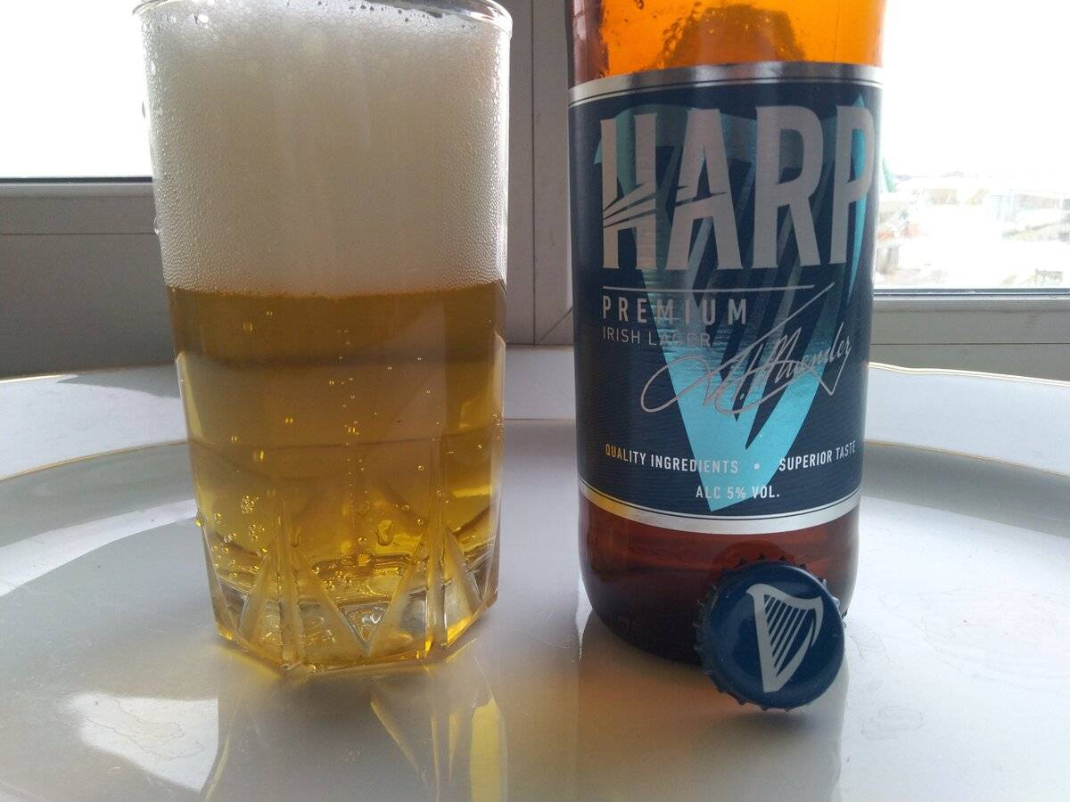 Пиво харп | barvosem.ru